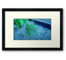 Frozen Ivy  Framed Print