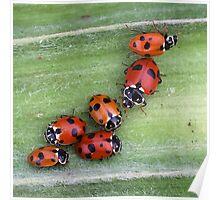 Ladybirds on Corn - Macro Poster