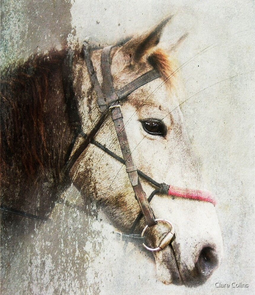 A horse called Meggs by Clare Colins