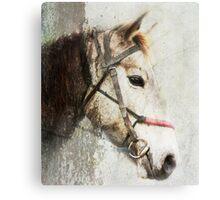 A horse called Meggs Canvas Print