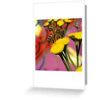 Tansy Bee - Macro Greeting Card