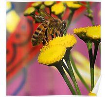 Tansy Bee - Macro Poster