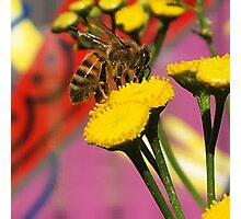 Tansy Bee - Macro Photographic Print