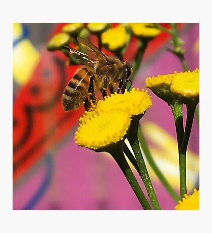 Tansy Bee - Macro Photographic Print