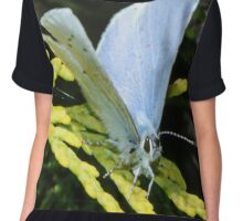 Holly Blue Butterfly Chiffon Top