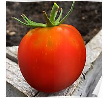 Ripe and Ready Tomato  Poster
