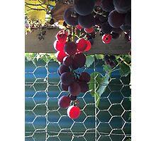 Opa's Vines ... Photographic Print