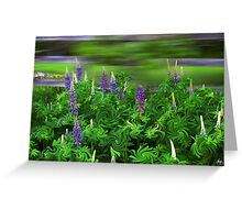Wind in the Lupines Greeting Card