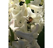 Bulbs and a Bee - 2 Photographic Print