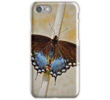 Spice Bush Swallowtail iPhone Case/Skin
