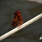 Butterfly by TJ Baccari Photography