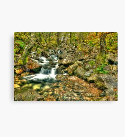 mountain stream Canvas Print