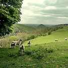 Dovedale lambs by doodledesign