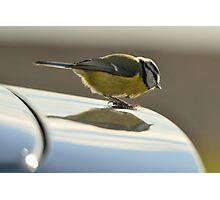 Blue Tit, a new logo on my car? Photographic Print