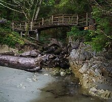 Foot bridge at Tofino by Carrie Cole
