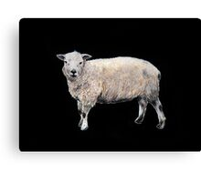 Vintage-style painted Sheep on black Canvas Print
