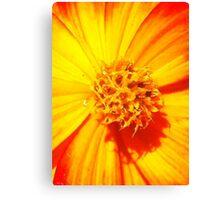 """""""Flowerburst"""" - Unique Original Artist's Floral Photograph! Canvas Print"""