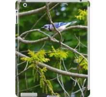 Cyanocitta Cristata - Blue Jays | Center Moriches, New York iPad Case/Skin
