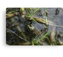 Frog v.1 Canvas Print