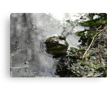 Frog v.2 Canvas Print