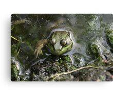 Frog v.3 Canvas Print