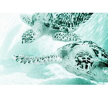 Turtle Reef Photographic Print