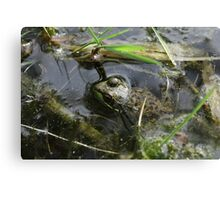 Frog v.4 Canvas Print