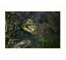 Frog v.5 Art Print