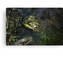 Frog v.5 Canvas Print