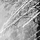 Snow Trails by Stephen Frost