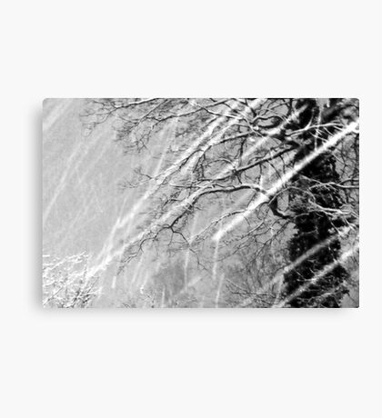 Snow Trails Canvas Print