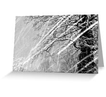 Snow Trails Greeting Card