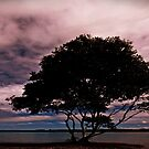 Lone tree at Yamba by myraj