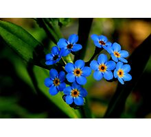 Forget-Me-Nots, Manfield Scar,River Tees, England Photographic Print
