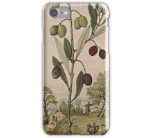 Ancient Botanical Art Olive Tree iPhone Case/Skin