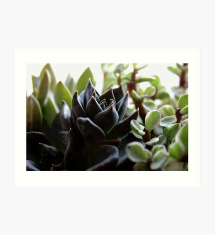 Succulents v.2 Art Print