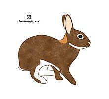 Chestnut Agouti Rabbit Photographic Print