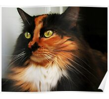 Tortoise Shell Cat Poster
