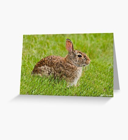 Rabbit in a Grassy Meadow Greeting Card