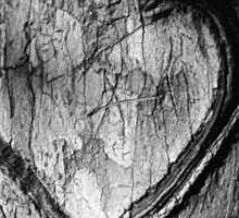 Tree Heart Black and White Sticker