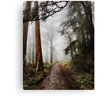 Forrest Fog Canvas Print