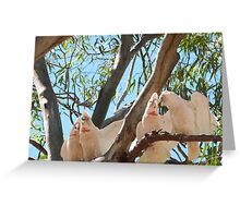 'I THINK IT'S TIME THEY SHUT UP! Noisy long billed Corella's, Victoria! Greeting Card