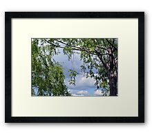 Trees in the park and cloudy sky. Framed Print