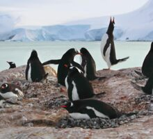 Gentoo Penguin Rookery on Trinity Island, Antarctica Sticker