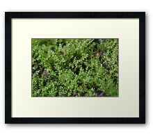 Moss on a small scale Framed Print
