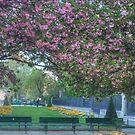 Cherry Blossoms Of Paris by Michael Matthews
