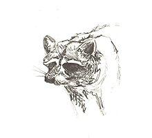 Raccoon Sketch Photographic Print