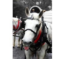 The Happy Horse  Photographic Print