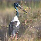 Stork Return by byronbackyard