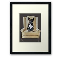 Jimmy French bulldog with attitude Framed Print